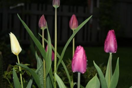 garden home 010